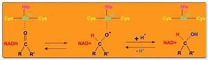 Oxidationszahlen Berechnen : archives for september 2016 bio chemie chemie sek ii ~ Themetempest.com Abrechnung