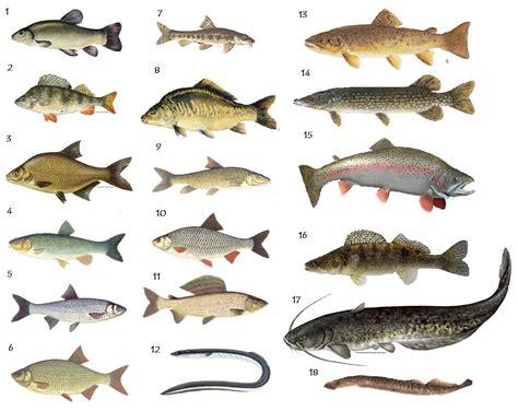 british fish pictures quiz  spikeharby