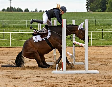 falling horses dangerous ride why saddle resize around thousand partnering humans institute five half notes australia south been years