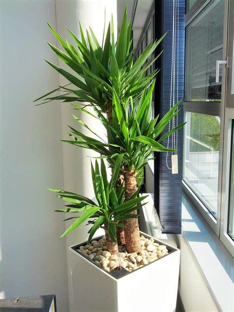 Piante Tropicali Da Interno - 6 piante d appartamento facili da curare dolcevita