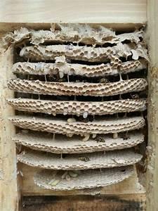 Wespen Im Winter In Der Wohnung : wespennest im rolladenkasten wespennest im rolladenkasten was ist zu tun wespennest unter dem ~ Frokenaadalensverden.com Haus und Dekorationen