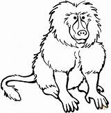 Baboon Coloring Pages Printable Clipart Baboons Animals Babouin Coloriage Animal Clipartpanda Imprimer Adult Supercoloring Sheet Cliparts Buffalo 20clipart Coloringbay Clip sketch template