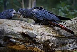 Free Images   Nature  Wing  Fly  Wildlife  Wild  Pet  Beak