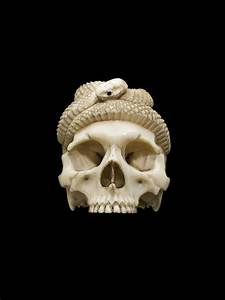 File Ivory Model Of A Skull And Snake  Europe Wellcome