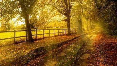 8k Wallpapers Landscape Tree Nature Desktop Fotos