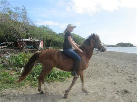 Riding Apache bareback on the beach - Picture of Island ...