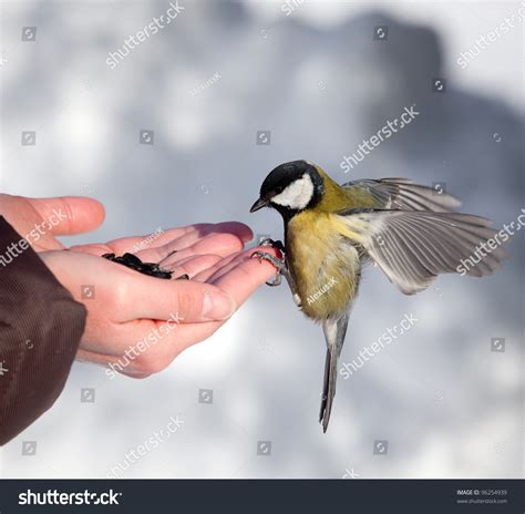 feeding of birds in the winter stock photo 96254939
