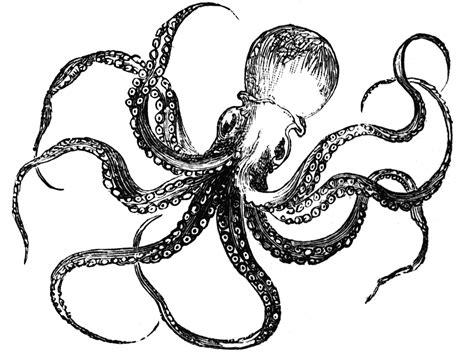octopus clipart clip octopus cool clip