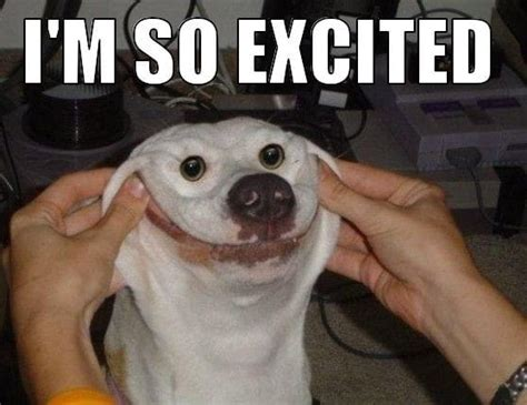 Excited Meme Excited Meme Collection Of So Excited Memes