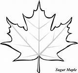 Leaf Coloring Maple Sugar sketch template