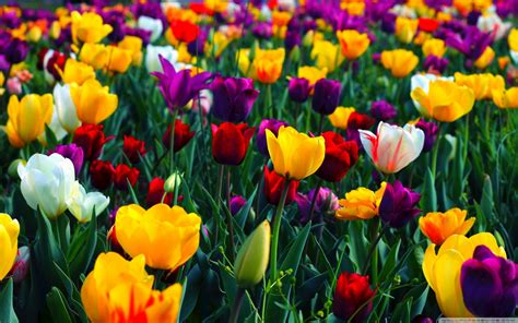 Spring Wallpapers Hd Download Free
