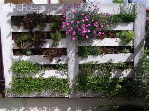 vertical succulent garden  wooden pallet  pallets