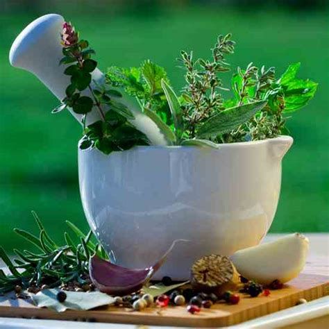 herbal medicines natural health mother