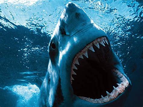Tiburon fondos de pantalla Animales fondos animales