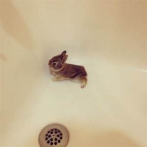 25 Best Images About Rabbits On Pinterest English Sweet