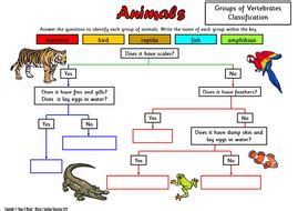 animal classification sorting activity and worksheets by