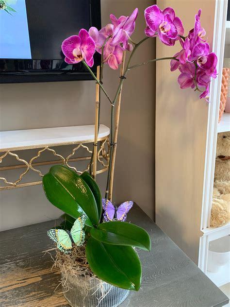 stem  phalaenopsis orchid  memphis tn premier flowers