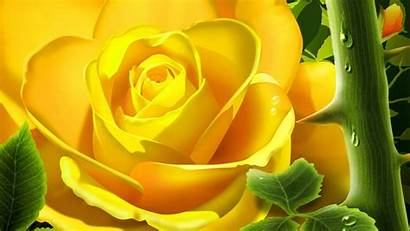 Yellow Roses Rose Wallpapers Background Flower Flowers