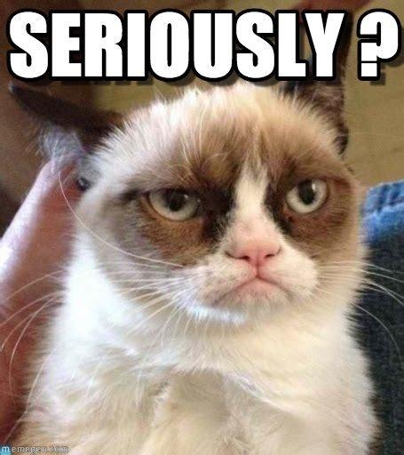 Seriously Meme - seriously grumpy cat reverse meme on memegen