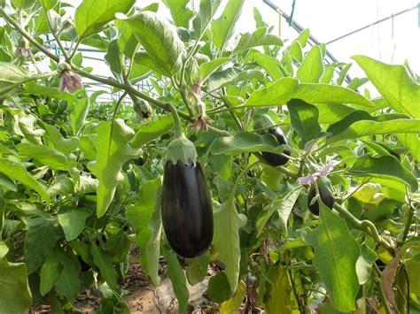 offre d emploi chambre d agriculture ibb légumes bio sous abris retour sur la journée du 10