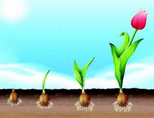 Planter Des Bulbes : printemps ~ Dallasstarsshop.com Idées de Décoration