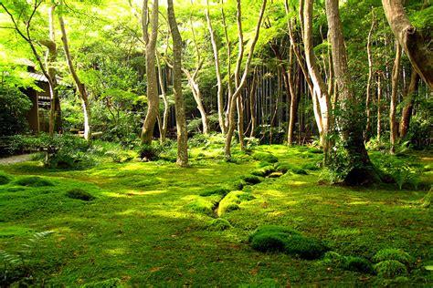 moss garden japan moss garden of saihō ji japan feel the planet