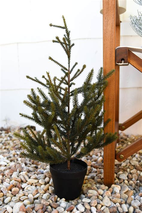 holiday favorites where to buy mini christmas trees