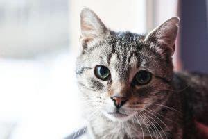 Cat Mean Kicikot