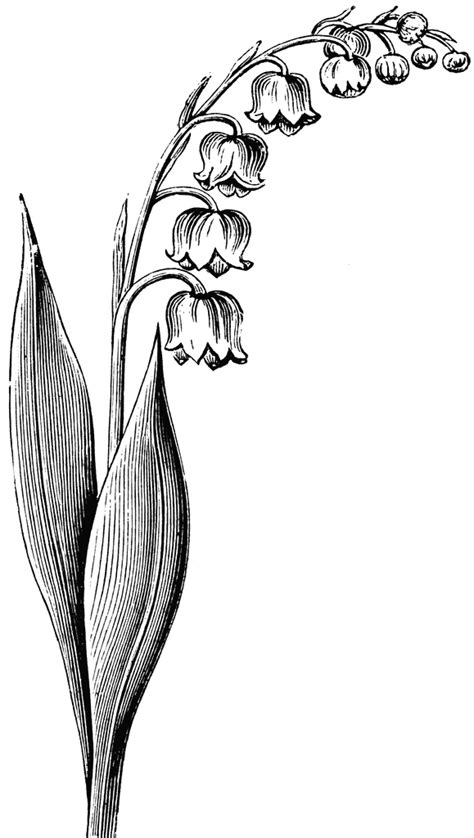 lilly of the valley flower drawing peter 39 s birth flower tatts pinterest