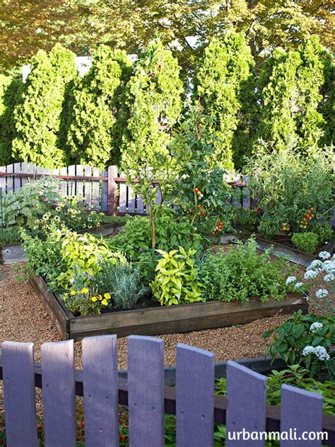 How To Start An Organic Vegetable Garden In Your Backyard by Tips For Growing An Organic Vegetable Garden