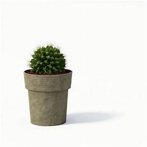 Small Potted Cactus 3D Model | CGTrader.com