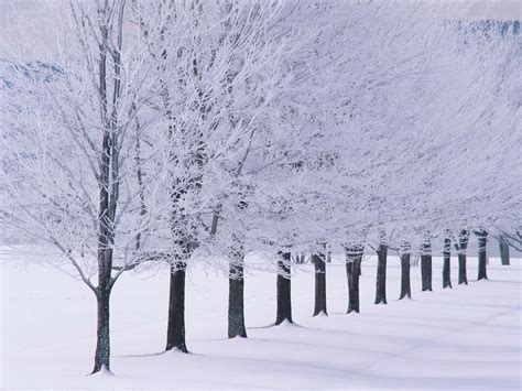 winter wallpaper snow tree lined wallpaper