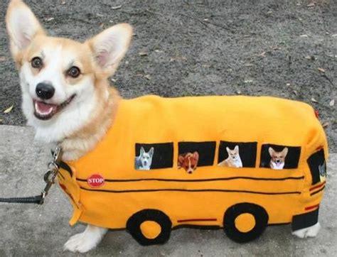 corgi dog costumes meningrey