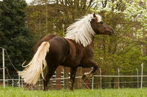 horse horses breeds prettiest rare forest breed these mane nothing seen ever chestnut dark flaxen german nature coat