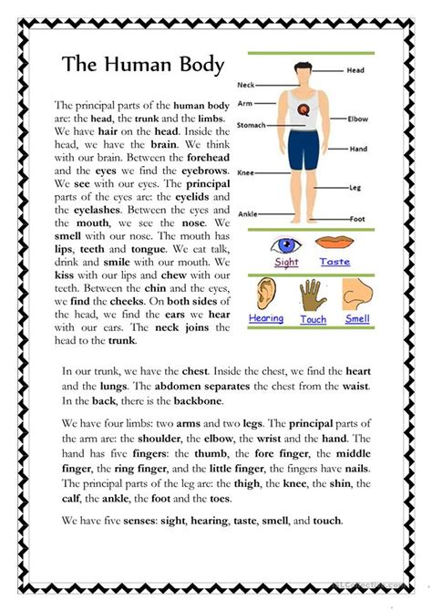 The Human Body Worksheet  Free Esl Printable Worksheets Made By Teachers