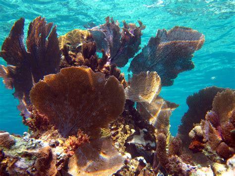 jamaica underwater