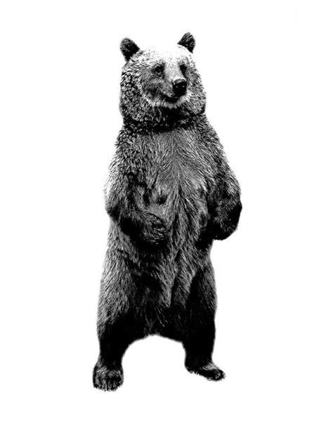 'Bear Standing Up. Wildlife Digital Engraving Image' Art Print by digitaleclectic | Wanderlust