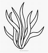 Coloring Clipart Seaweed Algas Algae Drawing Marinas Simple Colorear Dibujo Colorare Kelp Alghe Alga Disegno Disegni Ultra Sea Colorir Cartoon sketch template