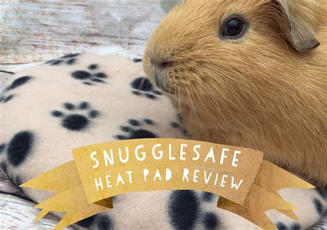 heat ls for pigs snugglesafe heat pad guinea pig review squidgypigs