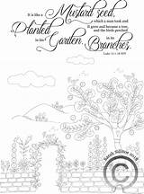 Mustard Plant Coloring Template Seed Faith Templates Sketch sketch template