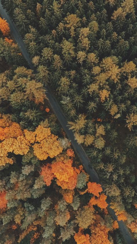 Autumn Iphone X Fall Wallpaper by 8 Free Autumn Inspired Iphone 7 Plus Wallpapers Preppy