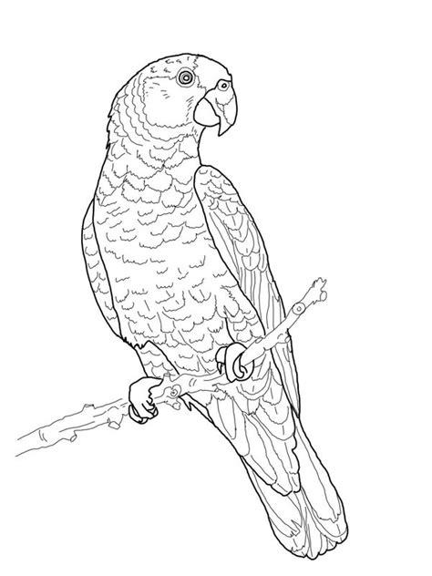 papagei ausmalbilder f 252 r erwachsene kostenlos zum ausdrucken teil 3