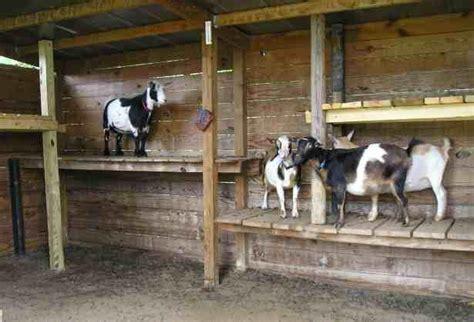 oconnorhomesinccom minimalist goat shed design
