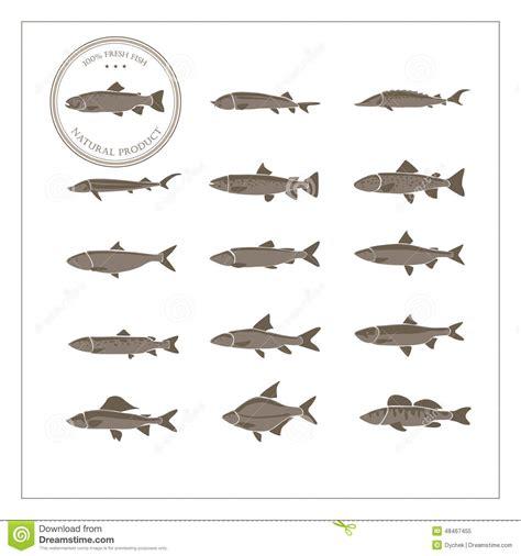 species  fish stock vector image
