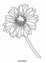 Daisy Coloring Pages Gerbera Flower Flowers Rose Printable Petal Colouring Yellow Getcolorings Colors Sheets Recommended Epic sketch template