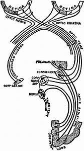 Optic Nerve And Optic Tract