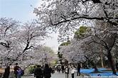 [東京櫻花]上野公園不忍池櫻花道 @ 停泊美麗角落 :: 痞客邦