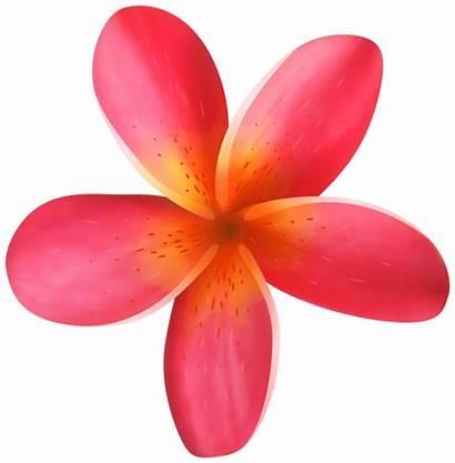 Tropical Flower Flowers Clipart Clip Hawaiian Stamen
