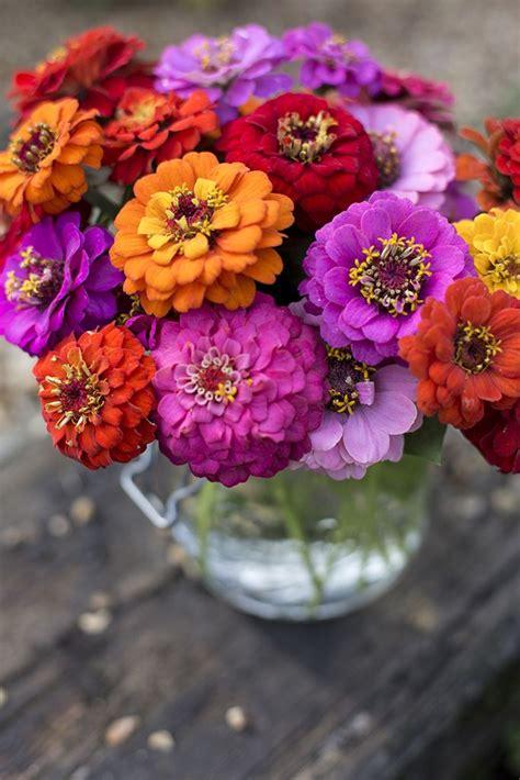 baesta zinnias ideerna pa pinterest blommor traedgard