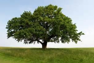 a zen of my own happy oak apple day